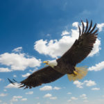 parable of the eagle