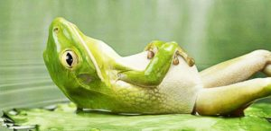 frog in state of deep relaxation