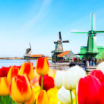 windmills and tulips invite us to Holland.
