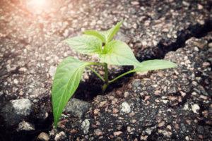 green plant growing in crack of asphalt